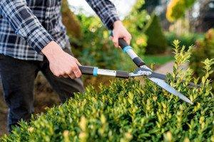 Straight garden shears IDEAL™